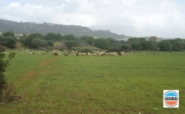 LAND FOR SALE IN MINIES, KEFALONIA